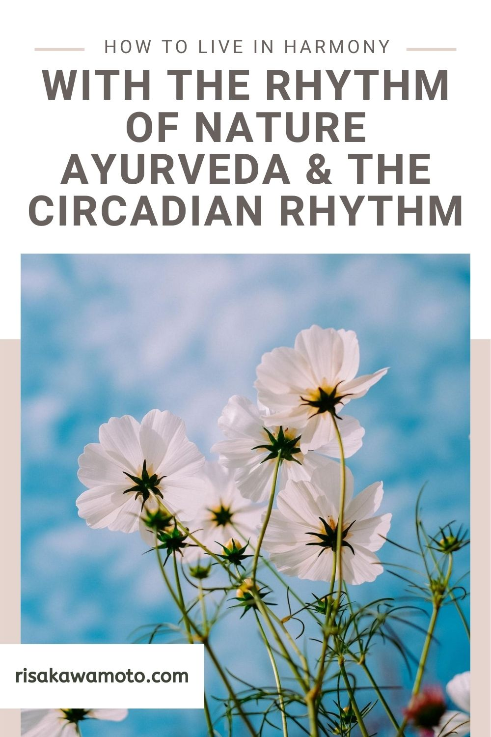 How to Live in Harmony with the Rhythm of Nature - Ayurveda & The Circadian Rhythms