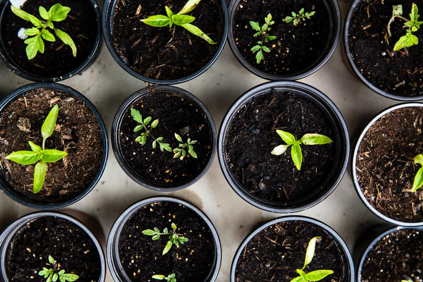 Why Growing Your Own Vegetables is Good for the Mind and Body